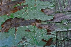 La pintura verde vieja se pela de una colmena de madera foto de archivo