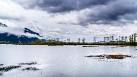 La pioggia scura si rannuvola Pitt-Addington Marsh Nature Reserve vicino a PItt Lake vicino all'acero Ridge, la Columbia Britanni immagine stock