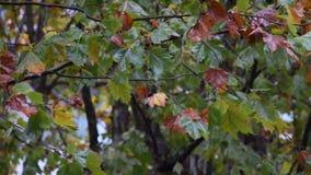 La pioggia sulle foglie video d archivio