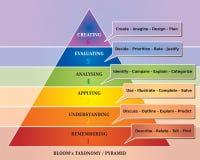 La pirámide de la floración/taxonomía - herramienta educativa - diagrama stock de ilustración