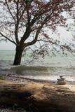 La piramide delle pietre con l'albero nell'acqua come fondo Fotografia Stock
