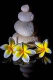 La piramide di pietra di zen con tre plumerie delicate bianche di frangapani fiorisce dopo pioggia sui precedenti riflettenti ner Immagini Stock