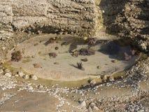 La piscina clara de la roca Imagenes de archivo