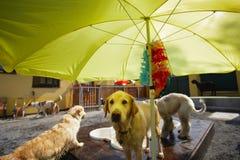 La piscina del perro Imagen de archivo