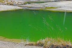 La piscine d'eau verte du parc national de Yellowstone Image stock