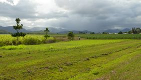 La pista de cultivo cubrió la nube tormentosa. Imagen de archivo libre de regalías