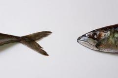La pista de los pescados, pesca una cola Fotos de archivo libres de regalías