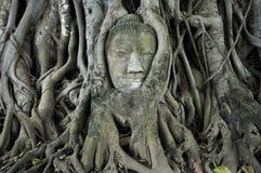 La pista de piedra del budda traped en las raíces del árbol Imagen de archivo
