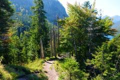 La pista de senderismo alrededor de Neuschwanstein famoso se escuda en una colina rugosa sobre el pueblo de Hohenschwangau cerca  foto de archivo