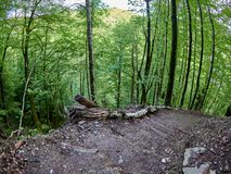 La pista de senderismo desciende de una cuesta muy escarpada en el bosque de la primavera fotos de archivo libres de regalías
