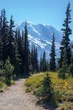 La pista de senderismo hermosa, fácil de la montaña de Burroughs proporciona visiones espectaculares fotografía de archivo