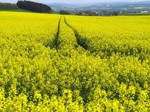La pista del tractor en Canola o colza coloca en alemán la región de Eifel, Mendig Foto de archivo