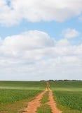 La pista di sporcizia attraverso il raccolto del grano incontra il cielo blu Immagini Stock