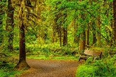 La pista y el banco de senderismo con los árboles scovered con el musgo en el rai Fotos de archivo