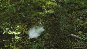 La piuma bianca cade nella foresta stock footage