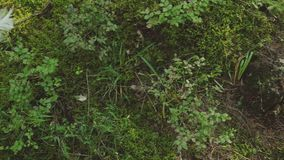 La piuma bianca cade nella foresta archivi video