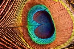 La piuma del pavone Fotografie Stock Libere da Diritti