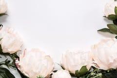 La pivoine rose-clair de faux fleurit autour du fond blanc avec l'espace de copie pour votre texte ou conception, vue de surface  Photo libre de droits
