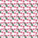 La pivoine rose de fines herbes florale de beau beau ressort merveilleux tendre mignon lumineux avec l'aquarelle de feuilles et d Image stock
