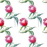 La pivoine rose de fines herbes florale de beau beau ressort merveilleux tendre mignon lumineux avec l'aquarelle de feuilles et d Photographie stock libre de droits