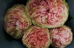 la pivoine rose s'est levée en gros plan, bouquet photographie stock libre de droits