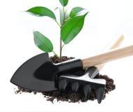 La plántula crece de un suelo fértil se aísla en un blanco Imagen de archivo libre de regalías