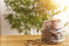 La plántula que crece en el tarro de dinero acuña en la tabla de madera, concepto como reserva, crecimiento, plan, finanzas, cuen fotografía de archivo libre de regalías
