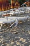 la plage avec une mouette Images libres de droits