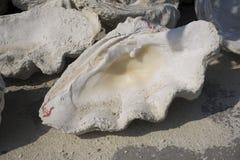 La plage des récifs coraliens Photo stock