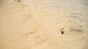 La plage ondule le steadicam banque de vidéos