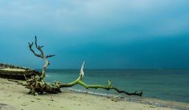 La plage sauvage Photos stock
