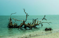 La plage sauvage 2 Images libres de droits