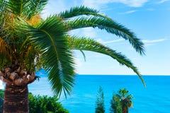 La plage tropicale avec des palmiers s'approchent de la mer bleue Vacances d'été exotiques Photos stock