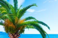 La plage tropicale avec des palmiers s'approchent de la mer bleue Vacances d'été exotiques Images stock