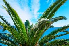 La plage tropicale avec des palmiers s'approchent de la mer bleue Vacances d'été exotiques Temps beau Photo stock