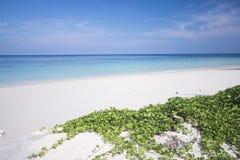 La plage tropicale avec le ciel bleu et la mer bleue calme surfent Photographie stock libre de droits