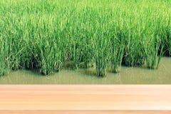 La plancia di legno su verde vago del fondo della piantagione del riso, pavimenti di legno vuoti della tavola sulla risaia della  fotografie stock libere da diritti