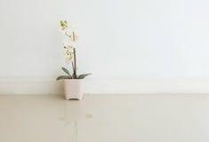 La planta artificial del primer con la flor blanca en la maceta rosada en piso de mármol borroso y la pared del cemento blanco te Foto de archivo