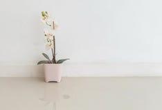 La planta artificial del primer con la flor blanca en la maceta rosada en piso de mármol borroso y la pared del cemento blanco te Fotos de archivo