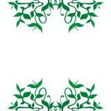 La planta brota la decoración de la frontera del marco Imagenes de archivo