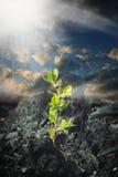 La planta crece en ceniza Foto de archivo