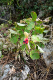 La planta crece en las montañas Imagen de archivo libre de regalías
