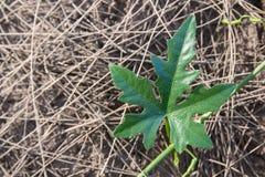 La planta crece en la saturación seca, baja fotos de archivo libres de regalías