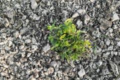 La planta crece en la saturación seca, baja imagenes de archivo