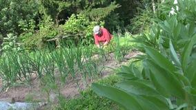 La planta de haba se va y las plantas de la mala hierba de la mujer mayor del jardinero en jardín Foto de archivo libre de regalías