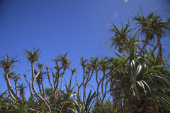La planta de la costa de la isla Imágenes de archivo libres de regalías