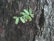 La planta de la vida crece verde del árbol del crecimiento fotografía de archivo