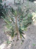 La planta de las variedades de los cactus imágenes de archivo libres de regalías