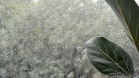 La planta de los ficus se va con el mún tiempo lluvioso fuera de la ventana almacen de metraje de vídeo