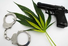 La planta de marijuana del cáñamo deja a peligro del crimen imagen ilegal con el arma y los puños foto de archivo libre de regalías